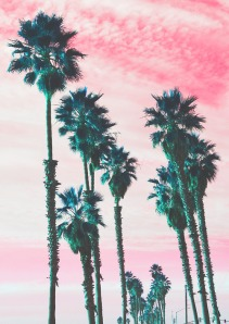 neon-palm-trees